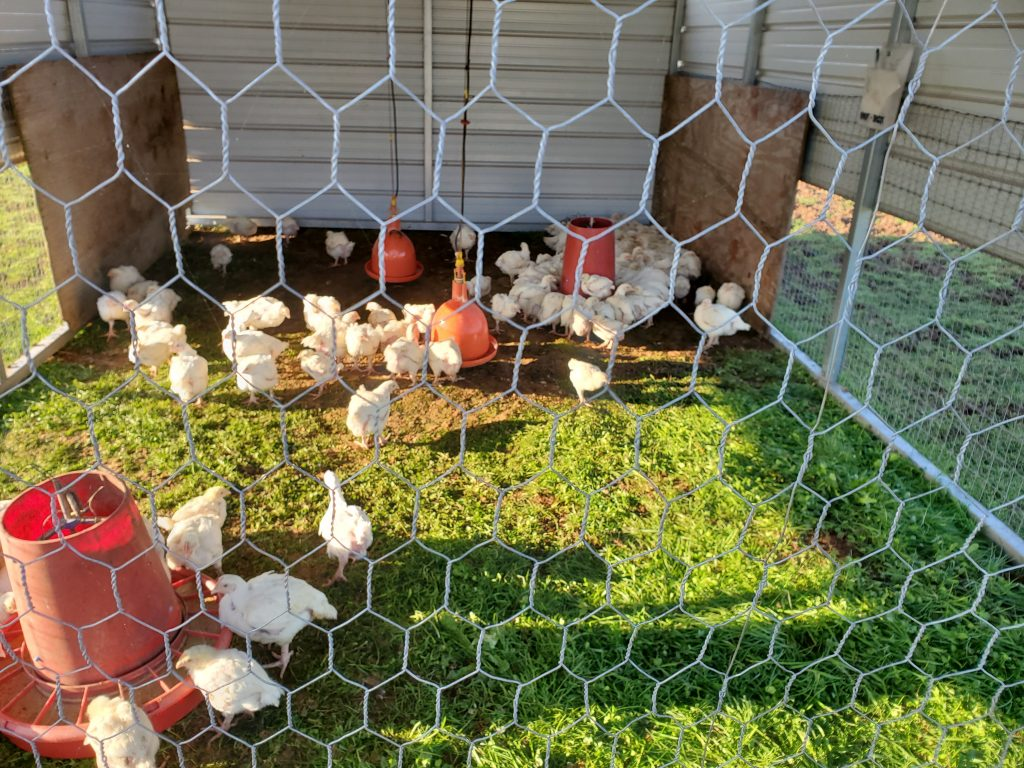 Simply Grazin' poultry pens