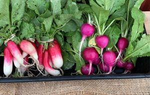 Breakfast and Purple Radishes from Skillman Farm Market and Butcher Shop