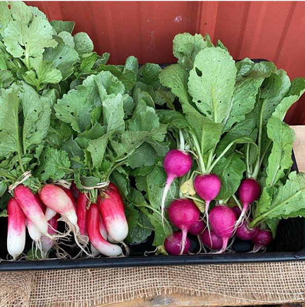radishes from Skillman Farm Market and Butcher Shop
