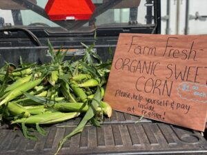 organic farm fresh corn
